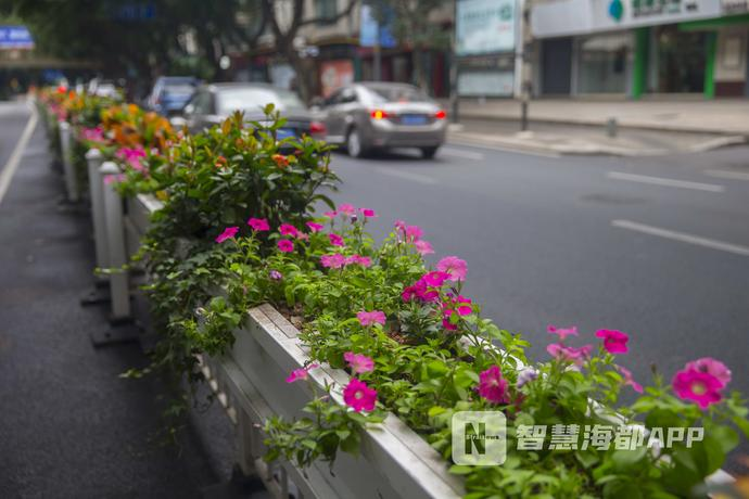 """七彩分车带,福州这条""""花街""""美出新高度!"""